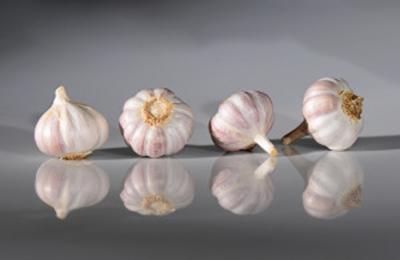 Garlic Morado